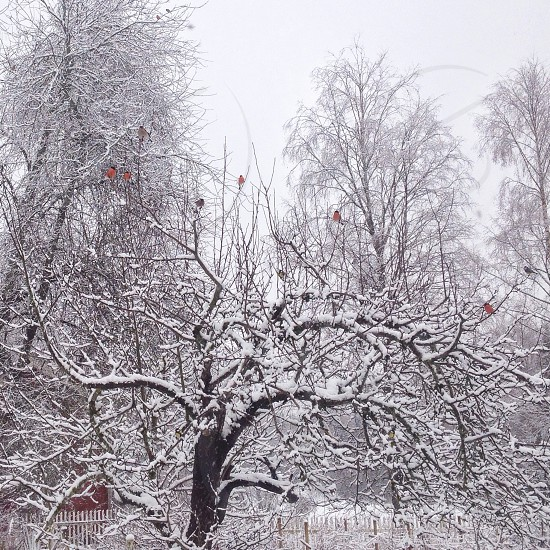 view of snowy tree branches photo