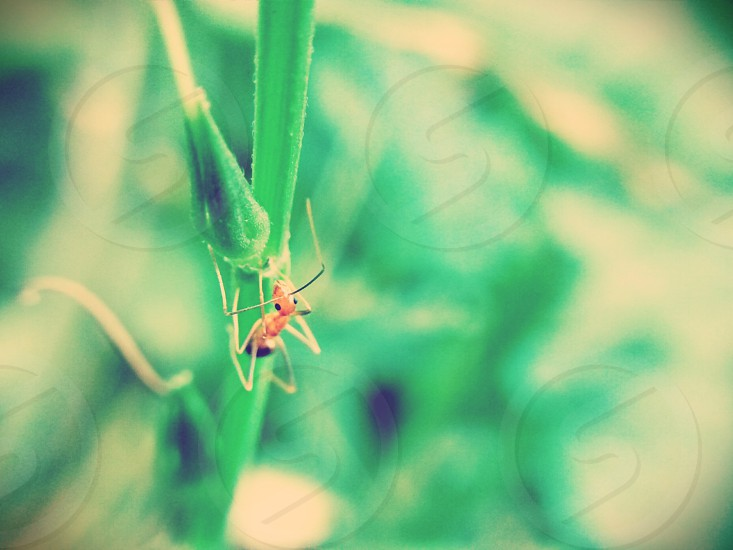Ant on Grass. Insects. Low Contrast. High Key. Green. photo