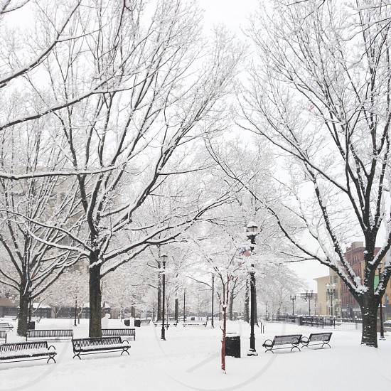 Winter in Worcester MA photo