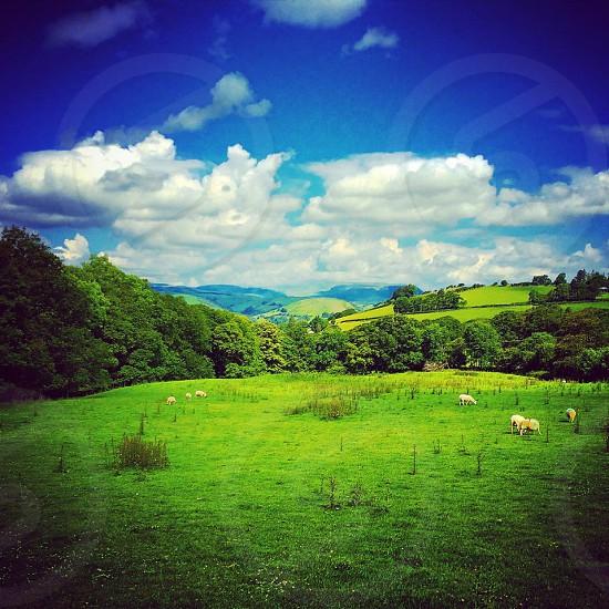 Summer Meadow Wales UK photo