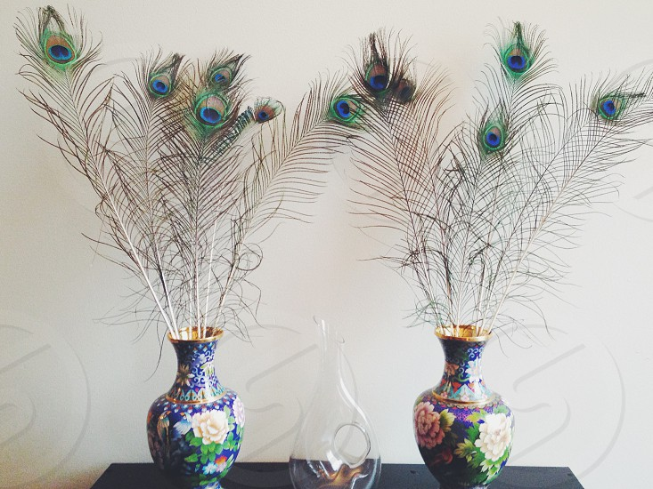 two vases with peacock feathes photo