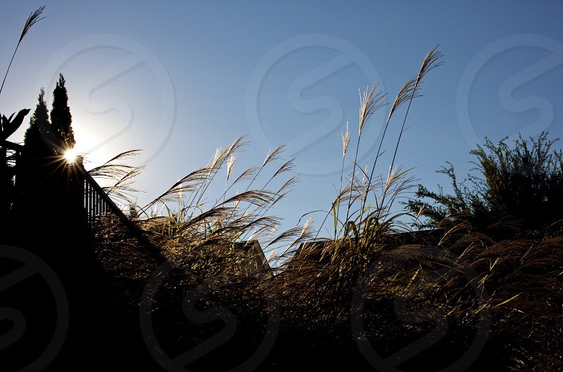 Blue sky reeds roof lines photo
