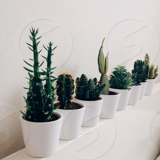 Cacti diversity photo