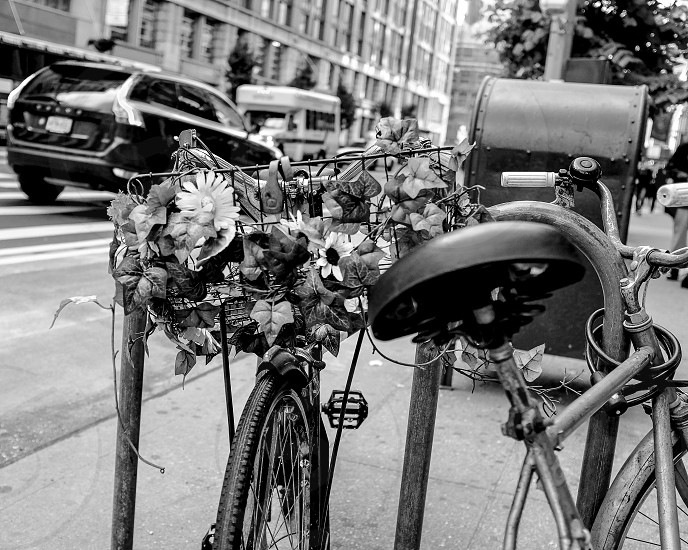 Urban Bike Bicycle flowers spring Black and white photography New York City life documentary   photo