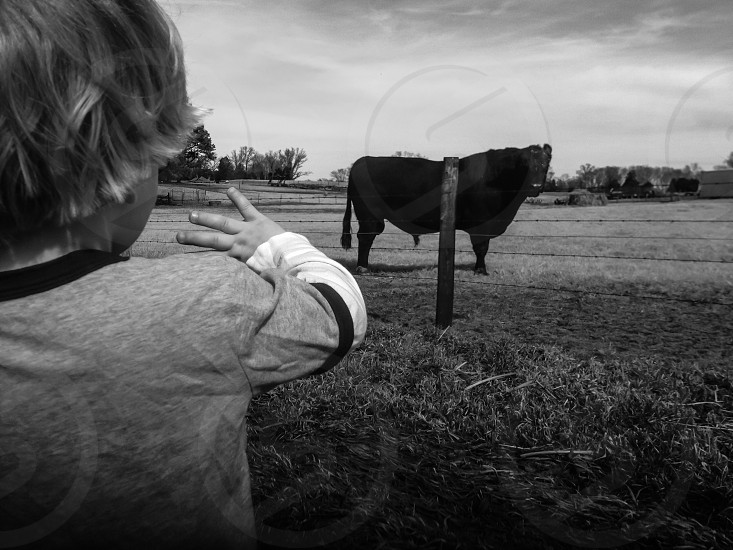 hi cow!  photo