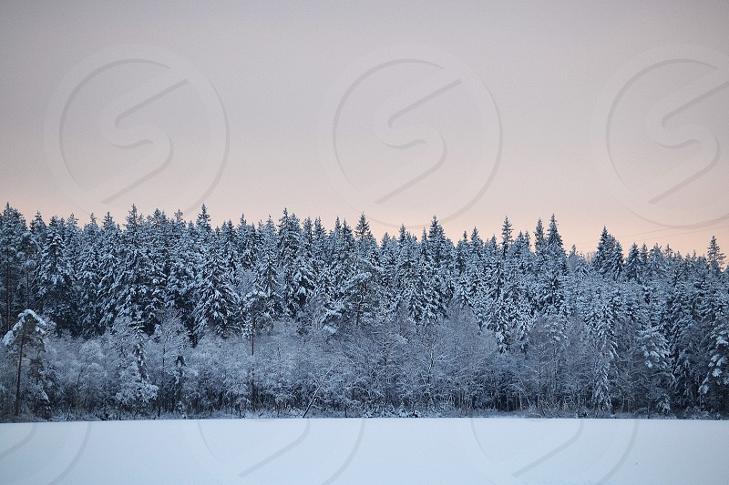 Winter scenery views view nature sky forrest ice lake landscape seasonal season  photo