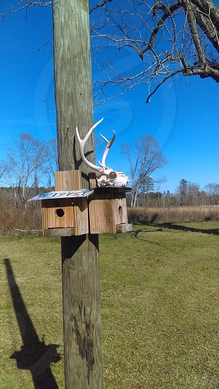 buck skull on birdhouse photo