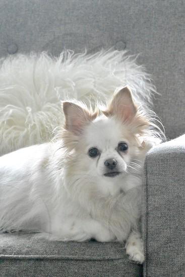 Royalty Dog Pet photo