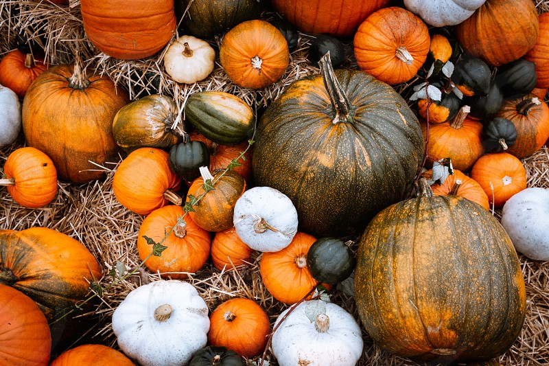 Pumpkins. photo
