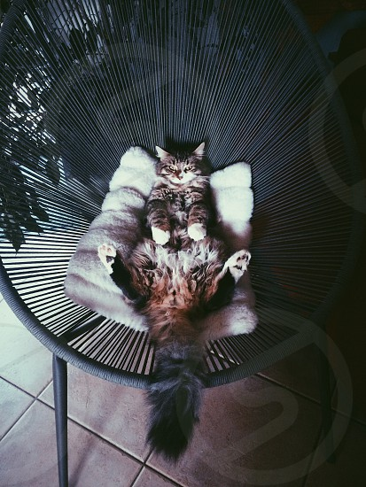 Grumpy. photo