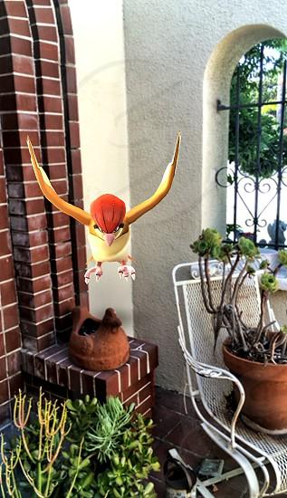 Pokemon Go -  Pidgeotto flew right on the patio photo