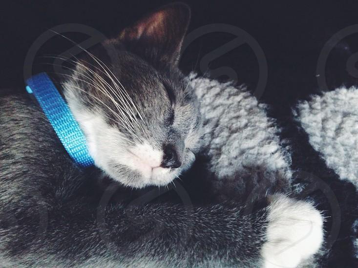 Our baby kitten Misha photo