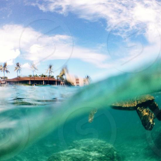 Underwater view of snorkeling with turtles in Hawaii photo