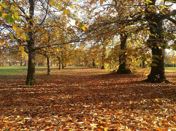 Greenwich Park November 2014. photo