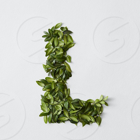 English alphabet concept. Alphabet isolated on white background. Abc letters from green leaves. Letter L represented with green leaves. Symbol L on white. photo