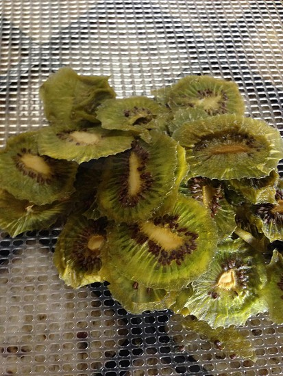 Dehydrated kiwi photo