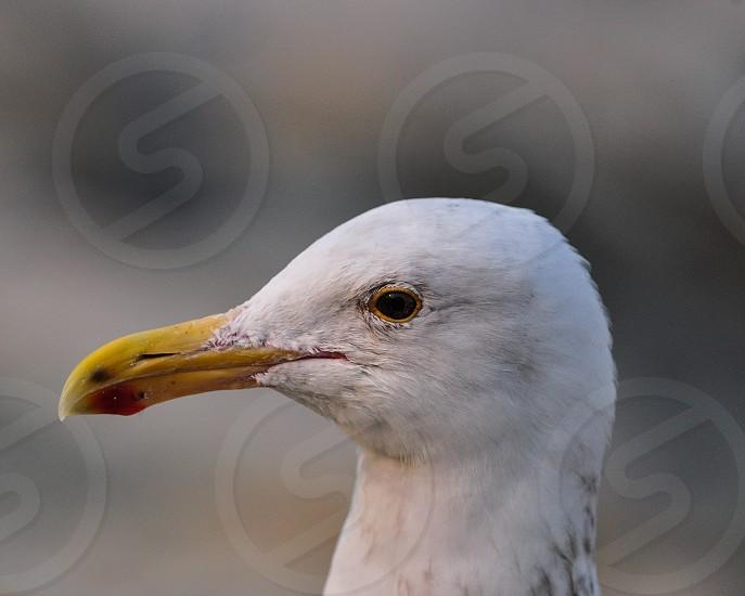 Seagull - 17 Mile Drive Monterey CA photo