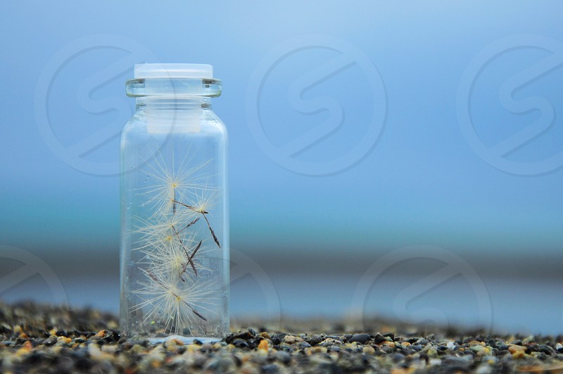 close up photo of clear glass vial on gray pebbled floor with dandelion petals inside photo