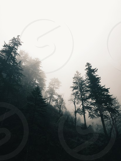 fog covered tree forest photo
