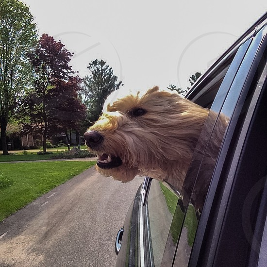 Head out the window photo
