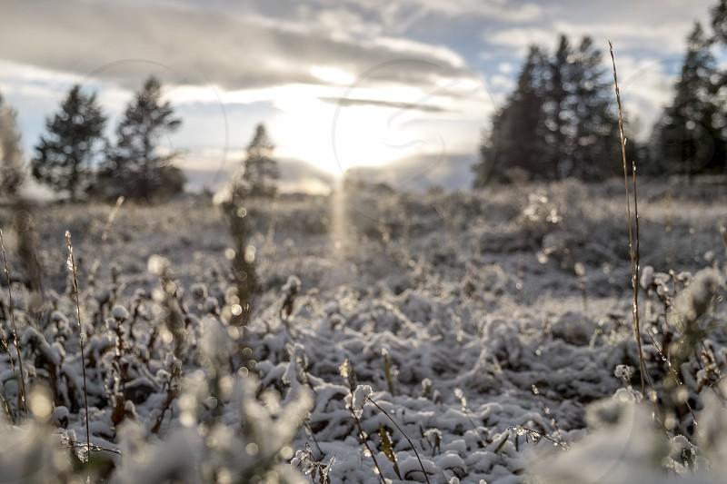 Snowy field photo