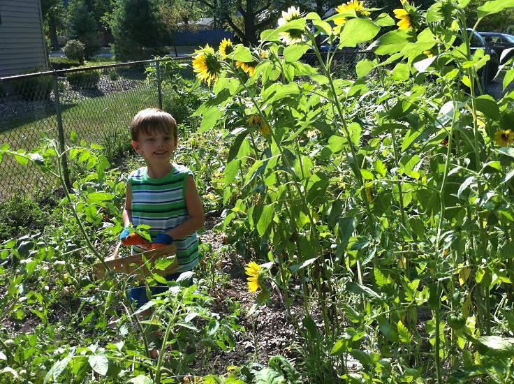 girl in green and white stripe dress in sunflower garden photo