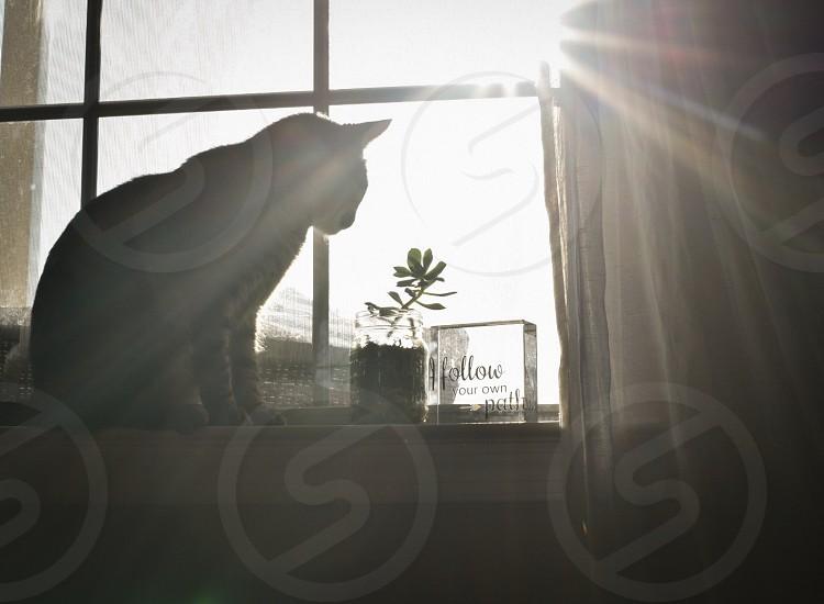Cat morning sun inspirational quote sun rays  photo