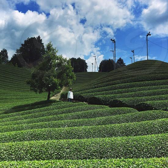 green plant field photo