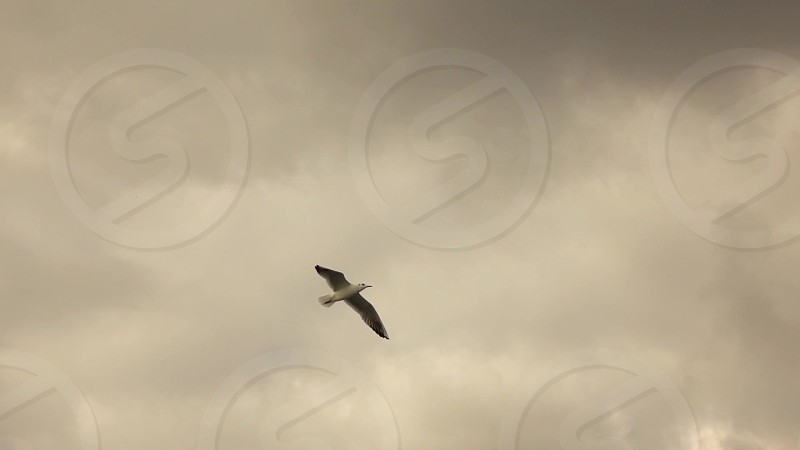 Cloudy sunset sky background with flying seagull. Slow motion Full HD video 240fps 1080p photo