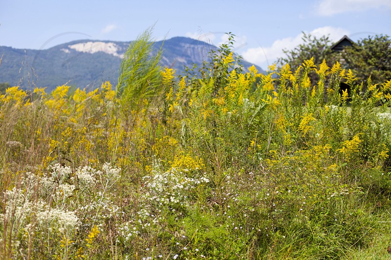 yellow and white flowers and green weeds photo