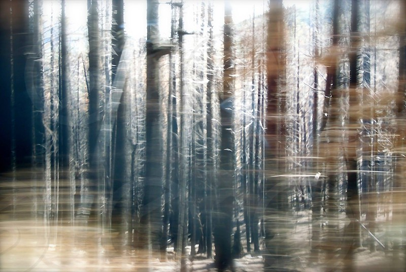 A forest as seen by a moving car.  photo