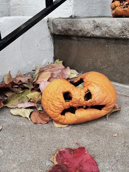 Sad pumpkin October Halloween rotting photo