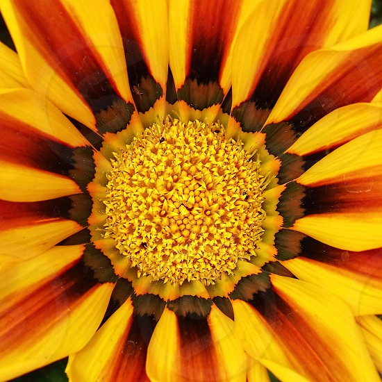 Macro view of a yellow and orange flower photo