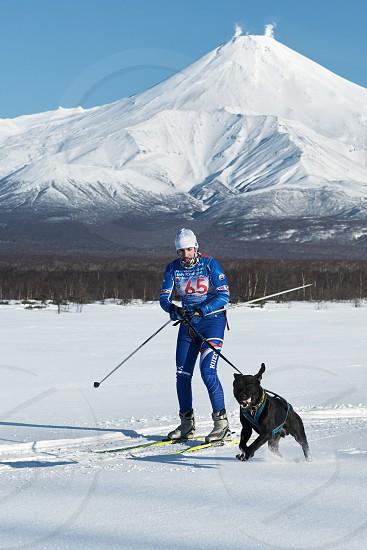 PETROPAVLOVSK KAMCHATKA PENINSULA RUSSIA - DEC 10 2016: Skijoring - competition for Cup of Kamchatka Region on background of Avachinskaya Sopka. Skier-racer Klimov Ivan and sled dog metis Butch. photo