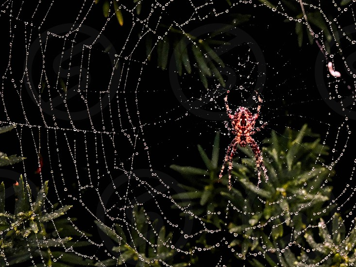 A spiders web with raindrop glitter. photo