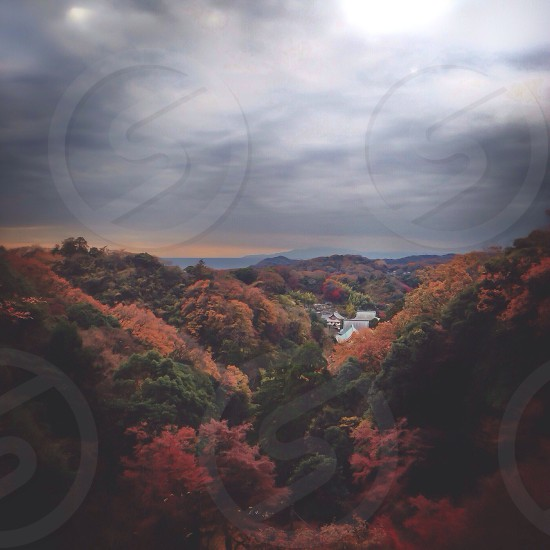 red green forest  photo