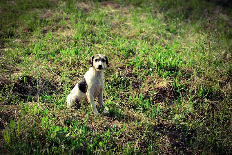 Dog sitting in grass photo