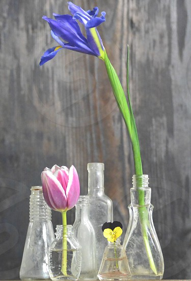 blue and pink flowers in clear glass bottle photo