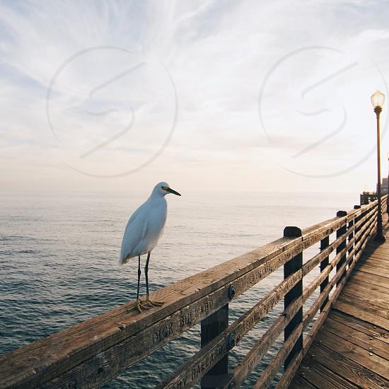 white bird on top of brown wooden bridge handle photo