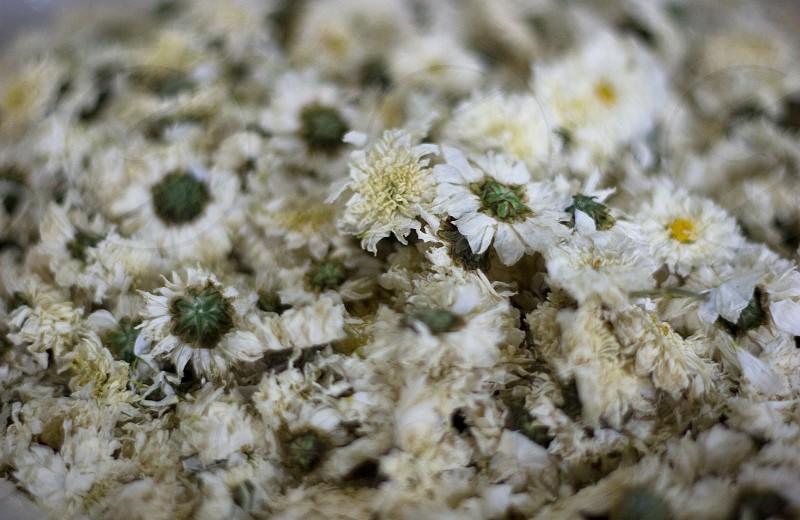 white flower photograph  photo