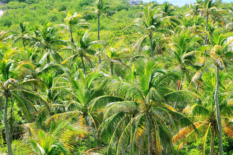 aerial view palm tree jungle in Caribbean Central America photo