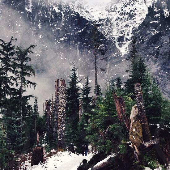 green pine tree on white snow mountain view photo