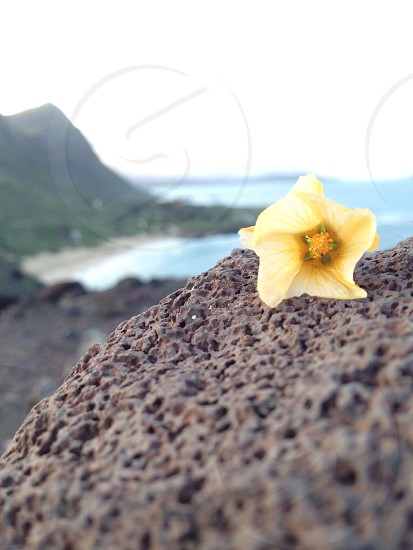 yellow flower on grey stone surface photo