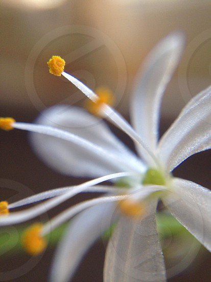 Close-up of a small flower. photo