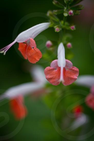 Flowers China photo