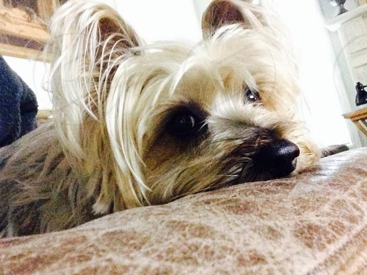 doggie photo