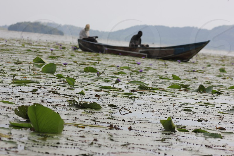 Fishing Among the Lilies photo