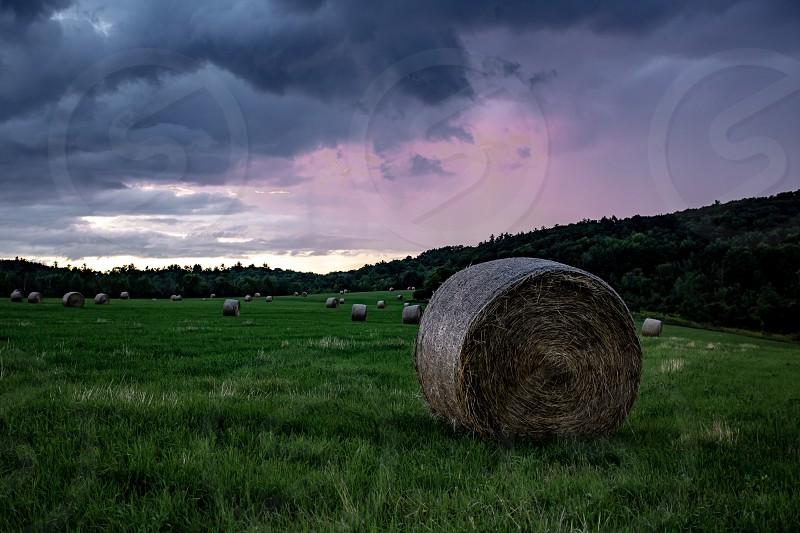 A field filled with hay bales photo
