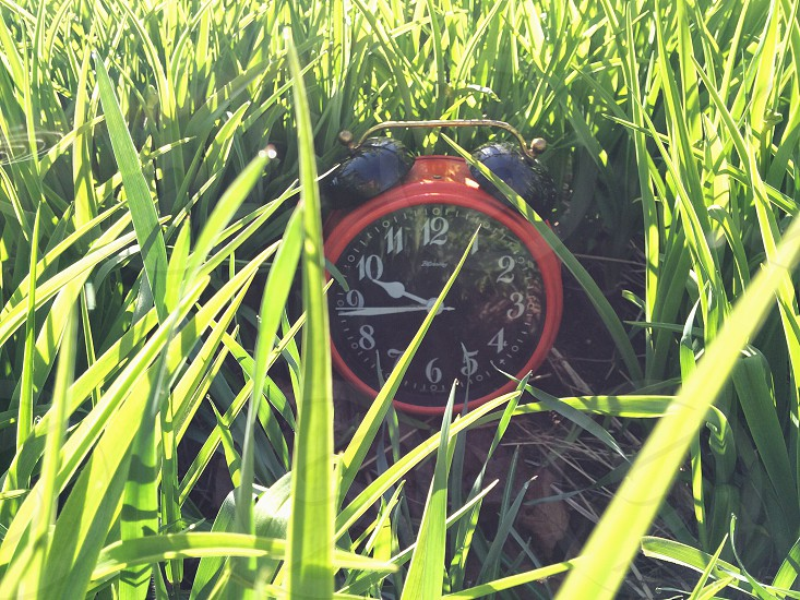 red round alarm clock 9:45 on the green grass photo
