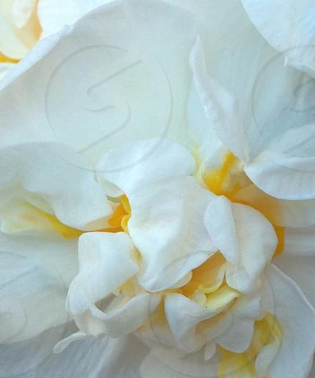 white flower in full bloom photo